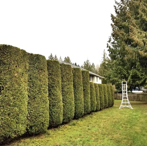 Garden and hedge pruning